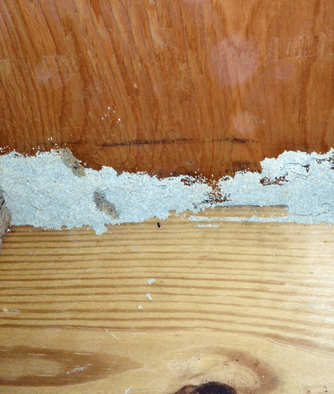 Termite Mud Tube Discovered in Toms River, NJ
