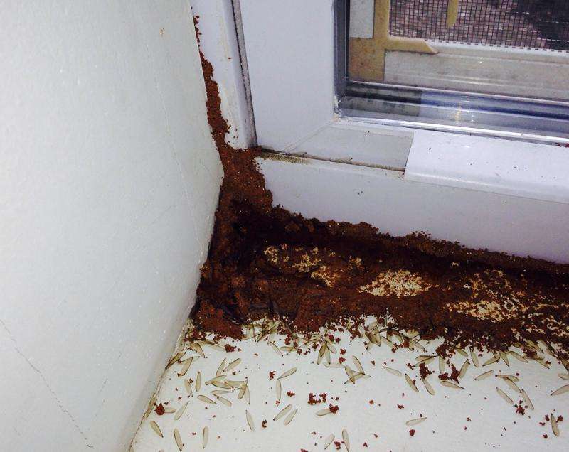 Termite Damage to a home in Avenal, NJ