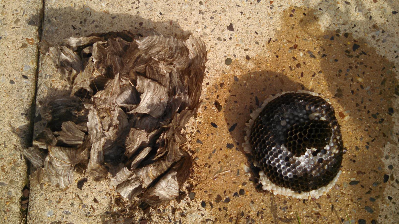Hornets nest broken open in Allentown, NJ