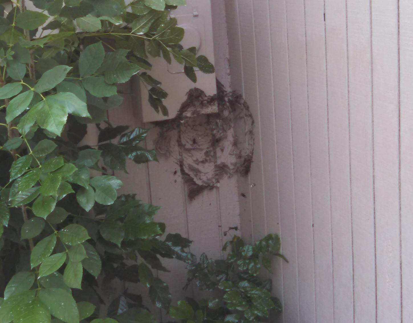 Removed nest in Allentown, New Jersey
