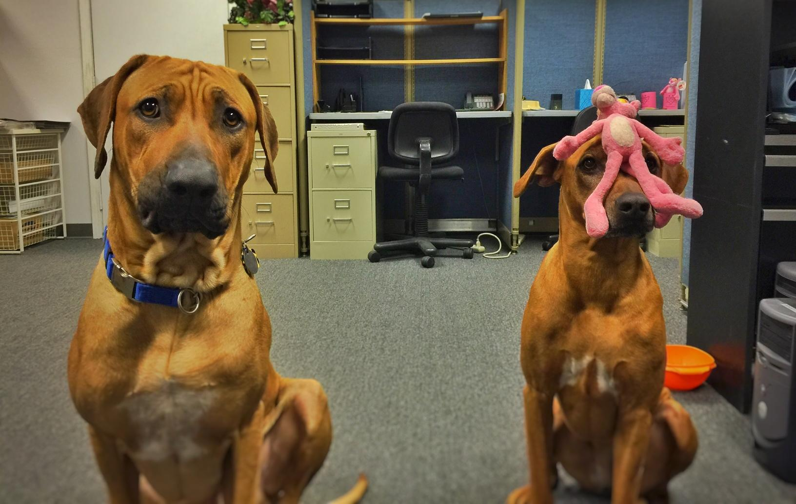 Meet Our Office Dogs Riley Amp Reese