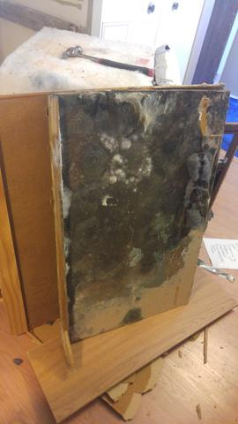 Mold Under Kitchen Cabinets Mold Solutions by Cowleys   Our Mold Removal Services Photo Album