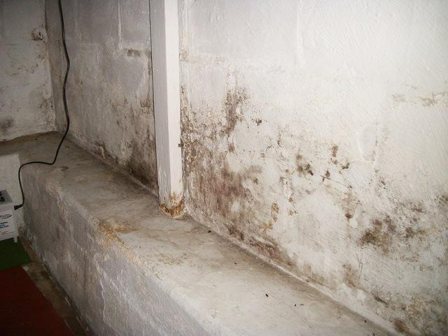How to avoid mold in your basement