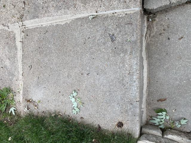 Any cracks or joints were also sealed to prevent water from entering and moving the concrete.