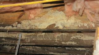 Ventilation is the best protection for mold build up.