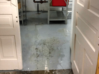 This is an example of the amount of water that was pooling within the basement