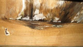 Mold can create a dangerous environment for any home and needs to be a serious concern for anyone faced with it.