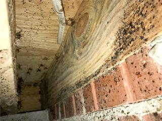 Homeowner Barry was not only dealing with mold but also pests that could get into his home through his crawl space.