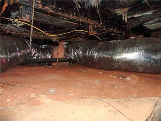 Homeowner Junior had not even thought to look in his crawl space until mold started showing up in his home.