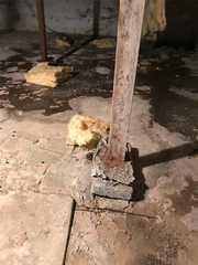Inadequate joist support