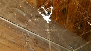 I proceeded to take a broom to whisk and remove every single spider web and spider from in between the beams.