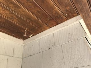 As I was treating the home, I noticed a lot of spider webbing around the windows and corners of the house.