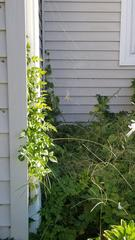 """While treating the exterior, I noticed a large web and noticeable """"dot"""" in the middle."""