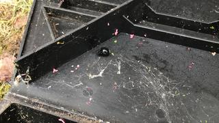 When I opened one of the rodent bait stations, I found a black widow tucked in the corner.