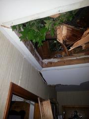 Tree limb inside the home.