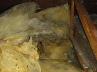 Don't know what old attic insulation looks like? Well now you do. Old attic insulation may seem like a small problem in the home, but it could be creating even bigger problems for a homeowner.