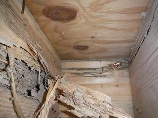 Encapsulation will prevent critters and moisture from entering your home. Don't let it get this bad.