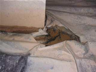 Water was pooling in some areas of Danny's crawl space, which over time led to mold issues.