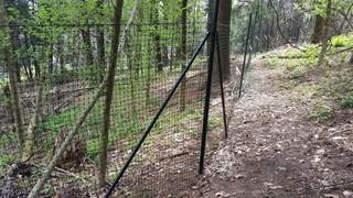 This is an additional photo of deer fencing fully installed.