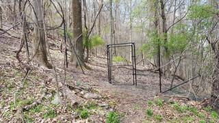 This photo also shows deer fencing.