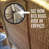 Bed bugs like to feed off people in their beds... but they don't always stay there. A professional will inspect the whole house when looking for these pests.