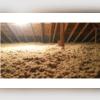 Une fois toutes les fuites d'air scellées et les trappes d'accès isolées. Nos experts ont soufflé notre isolant en fibres de cellulose pour recouvrir le plancher du grenier. C'est l'isolant le plus efficace sur le marché.