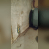 Before these homeowners had our wonderful products, they were left with a damp, humid, and uninviting basement. The levels of humidity were a breeding ground for mold.