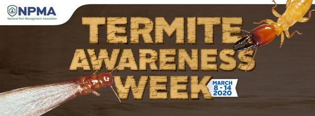 Top Five Signs of a Termite Infestation - Image 1