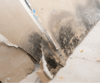 September is Mold Awareness Month: Control Moisture to Prevent Mold